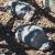 Nevada Sehenswürdigkeiten - Goldwell Museum in Ryholite