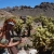 Nevada Sehenswürdigkeiten - Nelson Minen Dorf - Filmkulisse